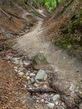 Fox Ravine near Jastrzebia Gora Stock Images