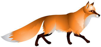 Fox with the red fur and a bushy tail. Vector image  of the wild animal, Canidae family mammal Stock Photos