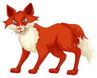 Fox with red fur standing Royalty Free Stock Photos