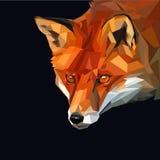 Fox. Red fox head intensive watching something on dark background Stock Photo