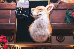 Fox relleno Imagen de archivo libre de regalías