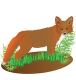Fox rojo hermoso libre illustration