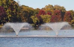Fox Rzeka Zdjęcie Royalty Free