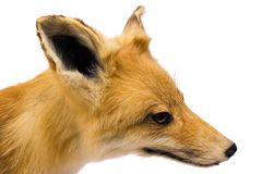 Fox (Side View). Portrait shot of a stuffed fox Stock Photography