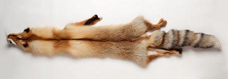 Fox skin. Lying on a white background Stock Image