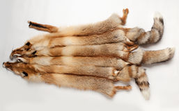 Fox skin. Three fluffy fox skin lying on a white background Stock Photography