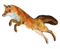 Fox skok Zdjęcia Royalty Free