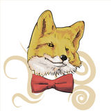 Fox. Sly fox in the butterfly tie Stock Photos