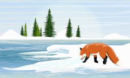 Fox on the snowy shore of the lake. Spruce trees on the horizon stock illustration