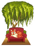Fox on sofa Stock Photo