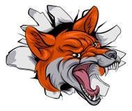 Fox sports mascot smashing through Royalty Free Stock Photos