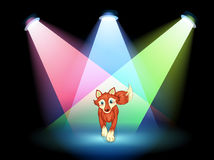 A fox at the stage with spotlights Royalty Free Stock Image