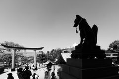 Fox statue and Torii in Black and white photo Royalty Free Stock Photography