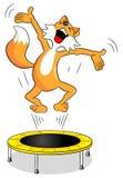 Fox su un trampolino Fotografia Stock