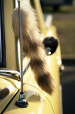 Fox tail on vintage car Royalty Free Stock Photos