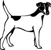 Fox Terrier. Line Art Illustration of a Fox Terrier Stock Photo