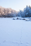 Fox tracks in the snow at winter Stock Photo
