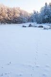 Fox tracks in snow Royalty Free Stock Image