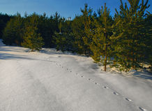 Fox trails on snowy field Stock Photography