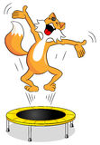Fox  on a trampoline Stock Photo