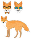 Fox and two heads of fox Stock Images