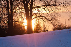 Fox und Sonnenuntergang Lizenzfreies Stockfoto