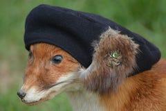 Fox vermelho com chapéu Fotografia de Stock Royalty Free