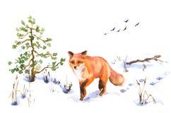Fox vermelho de passeio no esboço do inverno ilustração stock