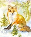 Fox w drewnach Zdjęcia Stock