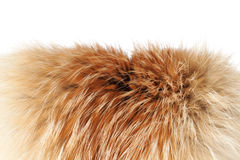 Fox Winter Fur Close-up 2 | Isolated Royalty Free Stock Images