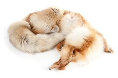 Fox winter furry skin #1. Taxidermy | Isolated Stock Photos