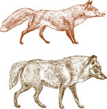 Fox and wolf Stock Photography