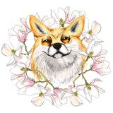 Fox in a wreath of magnolias. In a frame of pink flowers. Watercolor. Isolated on white vector illustration