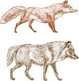 Fox y lobo Fotografía de archivo