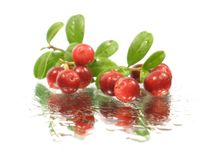 Foxberry Royalty Free Stock Photography