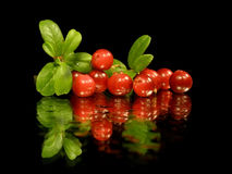 Foxberry Stock Images