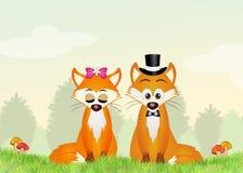 Foxes esposos Imagens de Stock