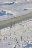 Foxes footprints in snow of river bank. Watered dark snow, young ice, grey grass in snow, old footprints Stock Photo
