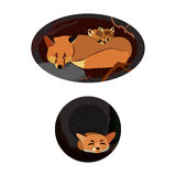 Foxes in a hole. Orange foxes sleeping in a hole Royalty Free Stock Photos