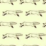 Foxes il modello senza cuciture Immagini Stock Libere da Diritti