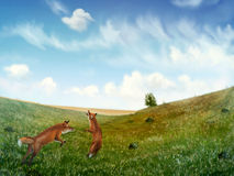 Foxes Playing In A Field - Digital Painting. Digital painting of two wild foxes playing in a rolling field of grass under a cloudy blue sky Royalty Free Stock Image