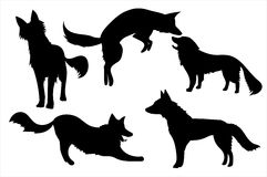 Foxes. Silhouettes of five different foxes Stock Images