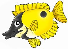 Foxface Rabbitfish. Color illustration of Foxface rabbitfish vector illustration