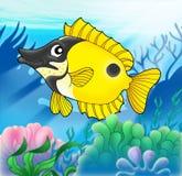 Foxfish con i anemones Immagini Stock Libere da Diritti