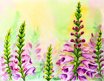 Foxglove flowers, watercolor Royalty Free Stock Photo