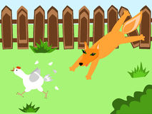 Foxie. A fox hunting a hen at the farmyard Royalty Free Stock Photography