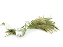 Foxtail Grass Stock Photos