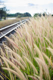 Foxtail weed and railway in the nature Royalty Free Stock Photos