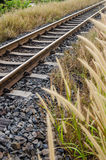 Foxtail weed and railway in the nature Royalty Free Stock Photography