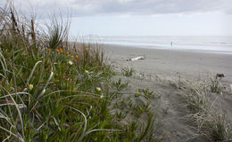 Foxton Beach, New Zealand Stock Images